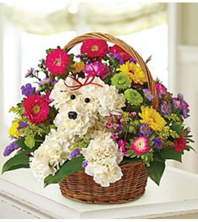 in a Basket a-DOG-able