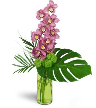 Blushing Grace Orchids™