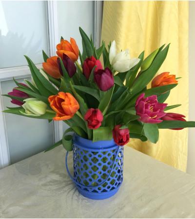 Assorted Tulips in Blue Lantern