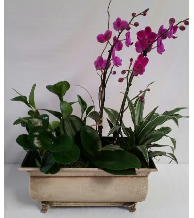 Zen Orchid Garden