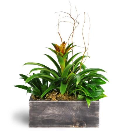 Dream Green Planter