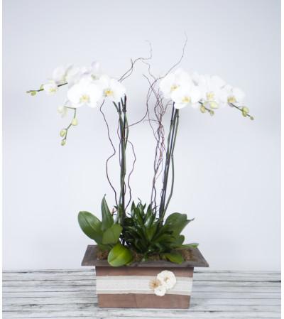 Decorative Premium Orchid Planter