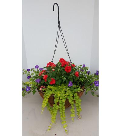 Hanging Basket for Shade