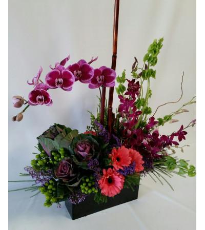 Paradise Orchids