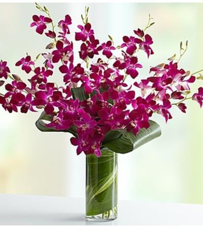 Orchid Embrace™ - Purple