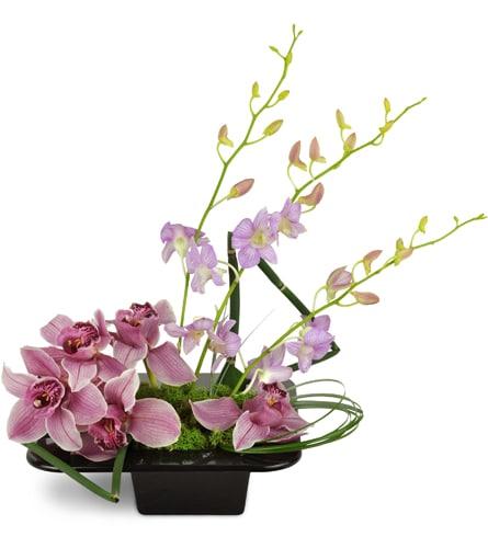 Shanghai Dusk Orchids™