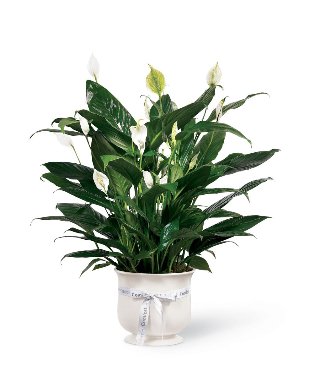 The FTD® Comfort Planter