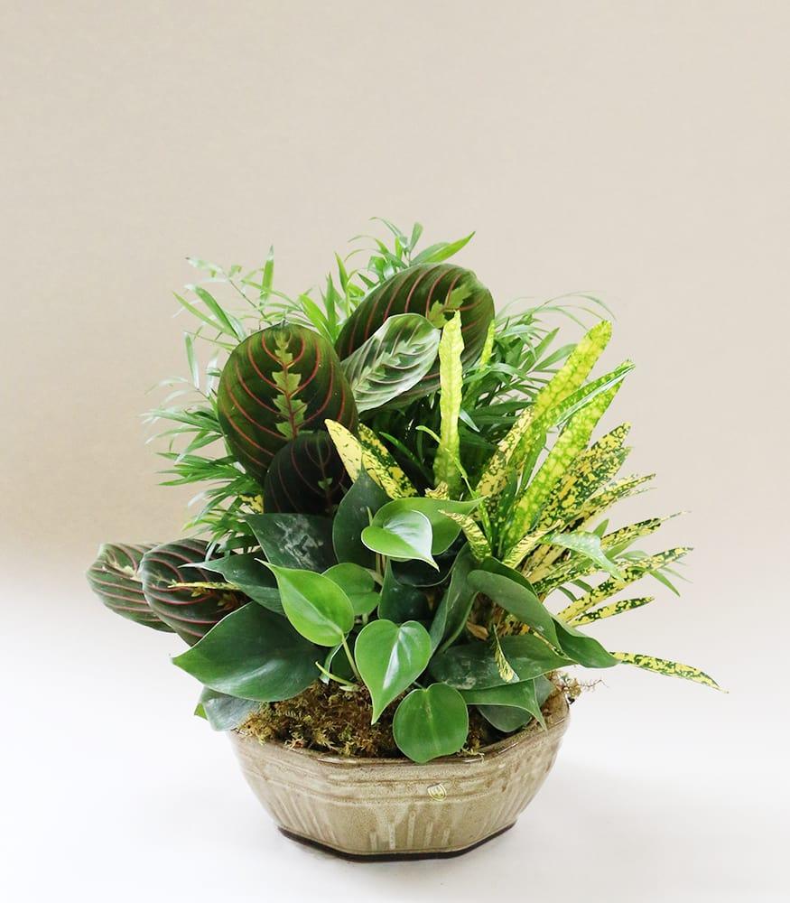 Decorative Custom Dish Garden