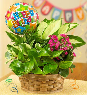 Happy Birthday Blooming Dish Garden