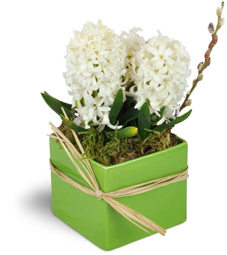 "White Hyacinth Planterâ""¢"