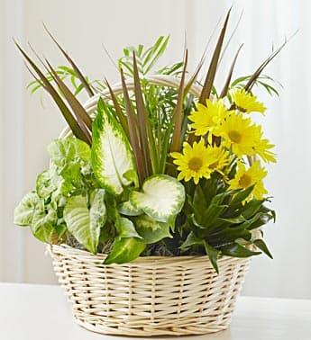 With Love Dish Garden & Fresh Cut Flower