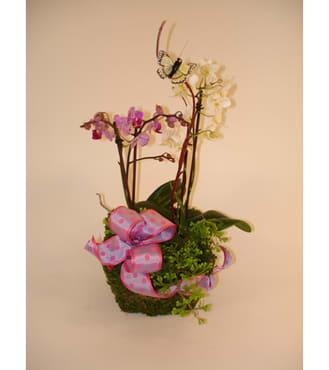 Mini Orchid Basket (Medium)