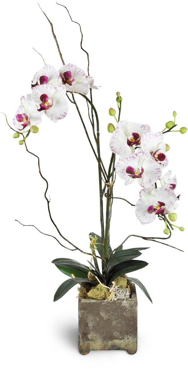 Opulent Double Orchid