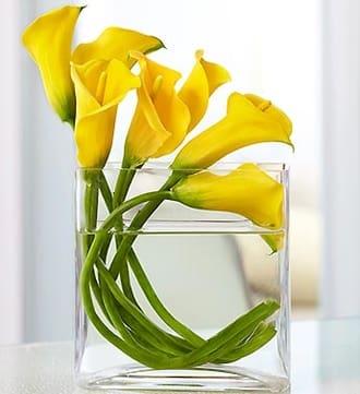 Mini Calla Lily in Rectangle