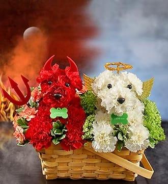 Devil Dog, Angel Dog™