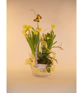 Daffodil basket