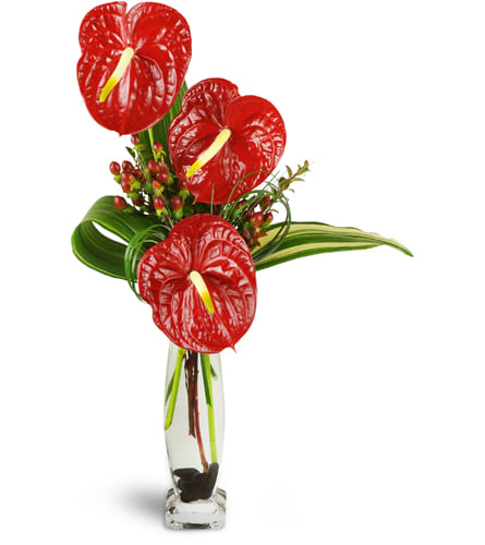 Elegant Red Anthurium™
