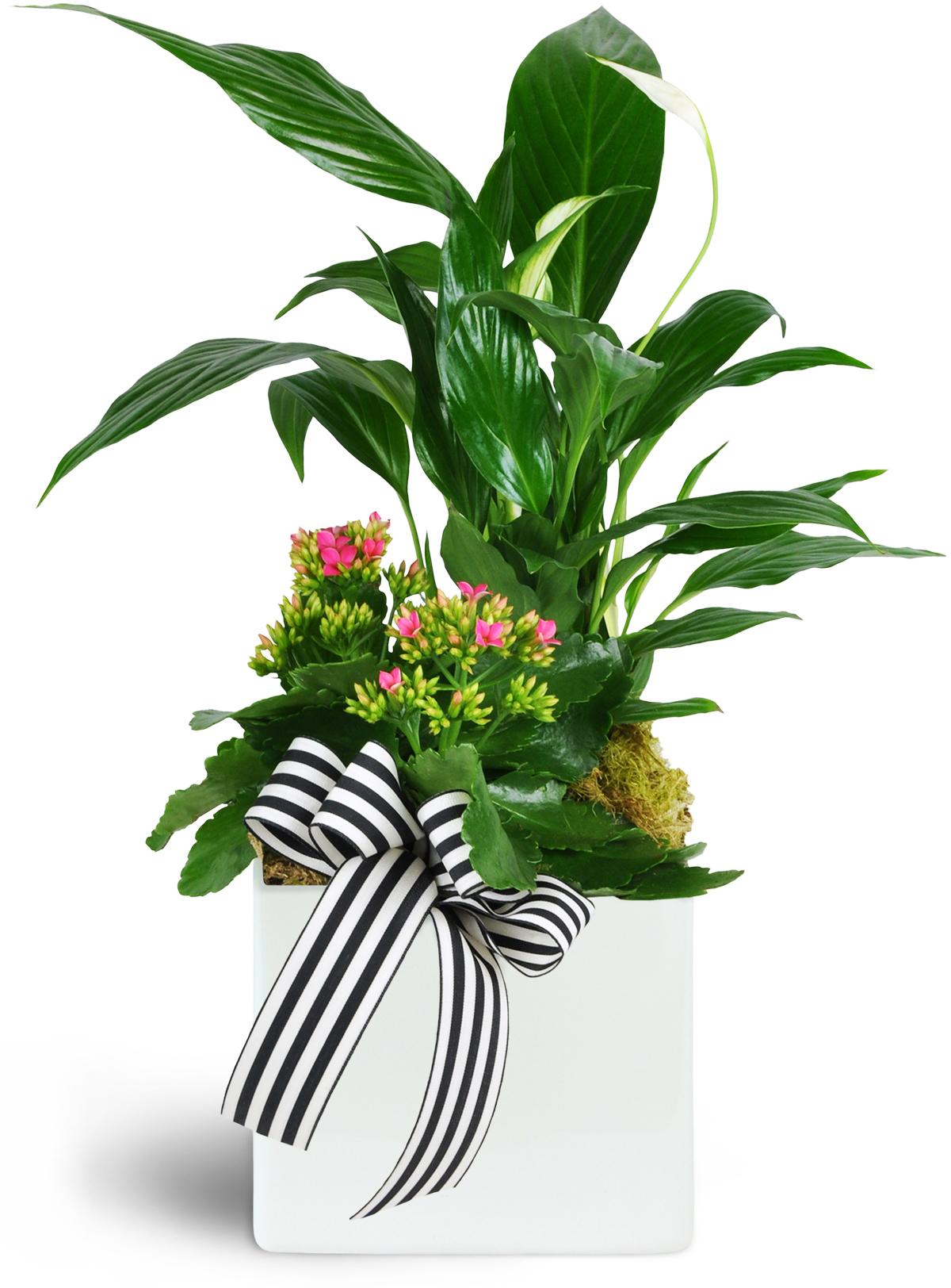 Image Result For Flower Delivery Garden City Ks