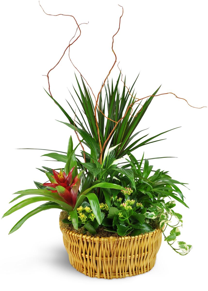 Classic Dish Garden Miami Fl Florist