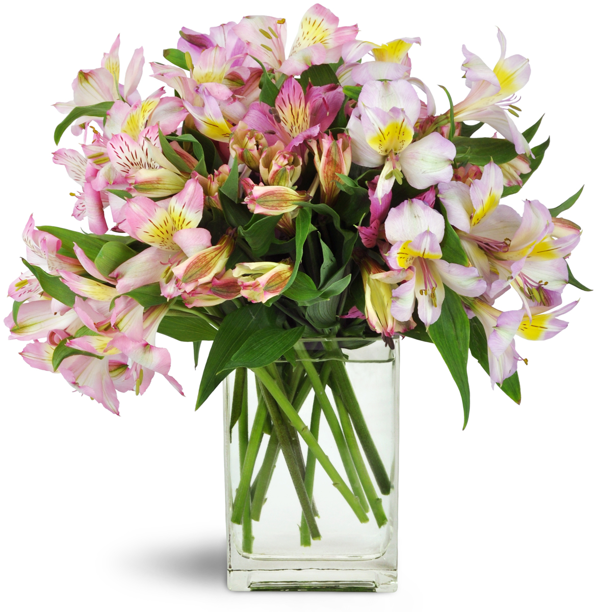 in stock file flower a clear pittsford florist cylinder and grove by mix vase cottage spring beautiful lovely delivery classic
