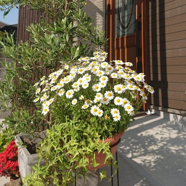 La Bloom