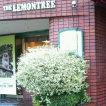 the LEMON TREE 廿日市店(ザレモンツリィ)