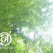 eao(cd')(ヘアーオーク)