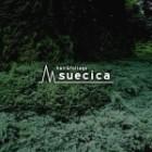 suecica