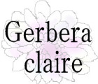 Gerbera claire
