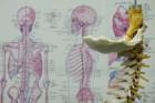 【淀川区・腰痛 骨盤矯正 専門サロン】学カイロプラクティック
